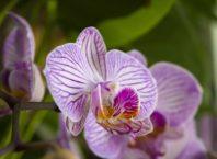 aprenda-como-cuidar-de-orquídeas