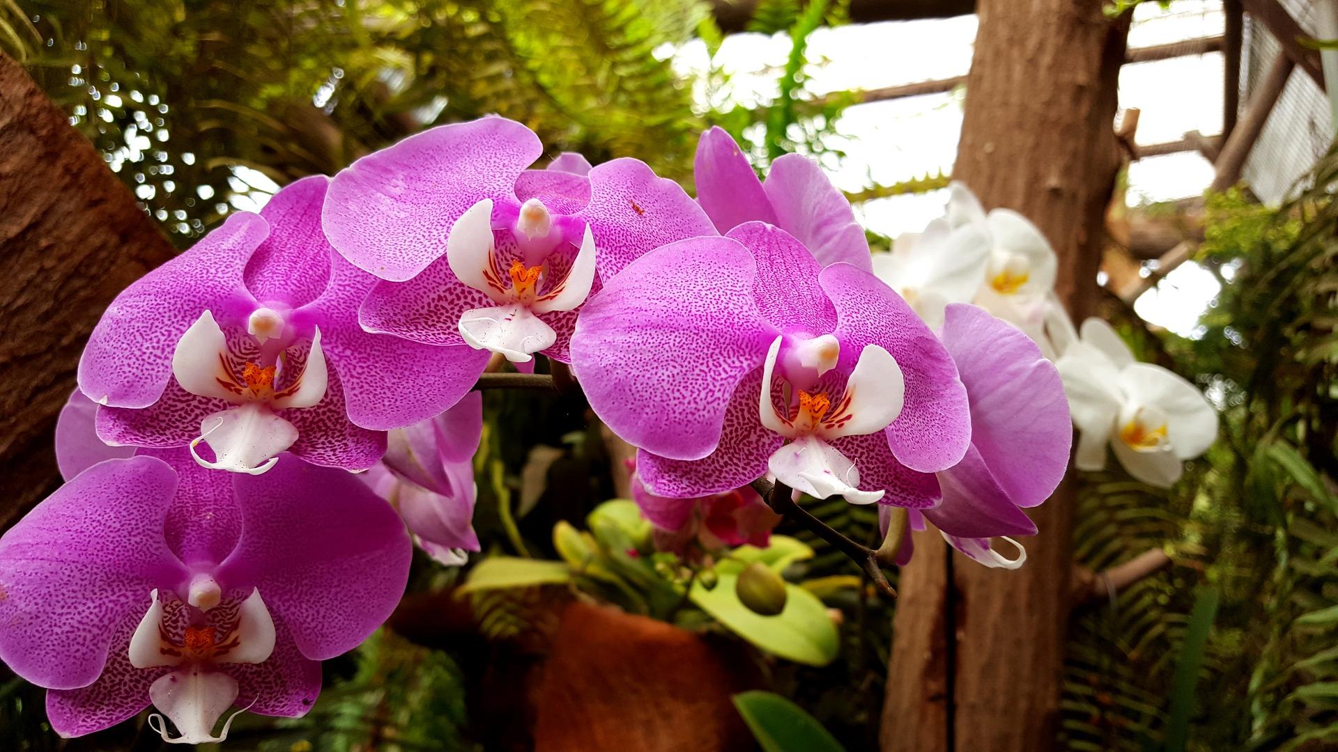 aprenda como cultivar orquiídeas