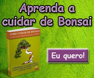 curso-como-cuidar-de-bonsai