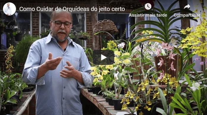 como cultivar orquideas curso