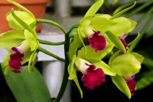 como-cuidar-de-orquideas